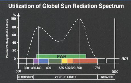 13657PARphotosyntheticactivitygraph.jpg