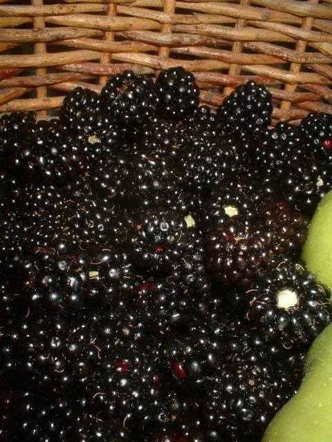 7253apples_blackberries2.JPG