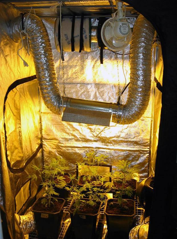 marijuana grow tent setup
