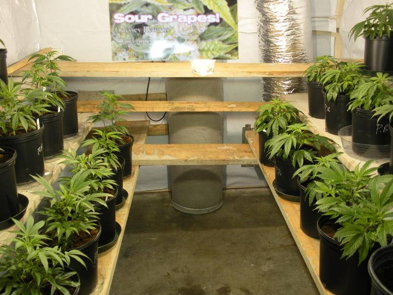 Indoor Vertical Grow Systems 101 Vertical Colosseum