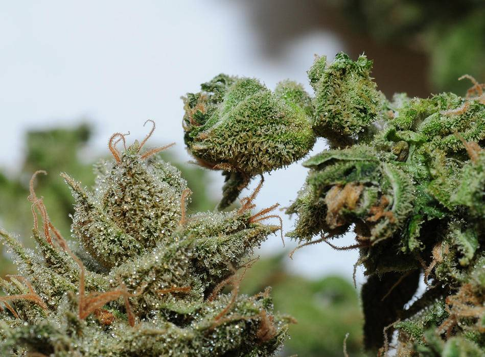 how to make cannabis resin