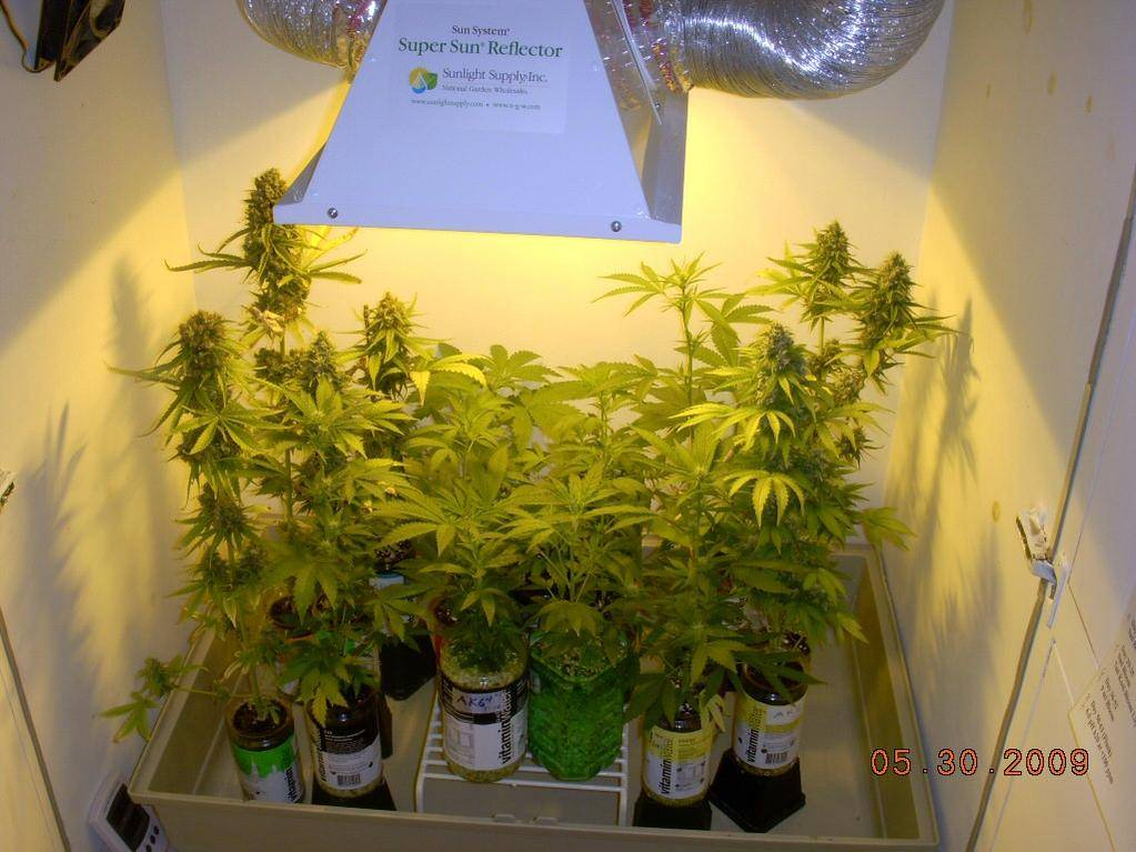 Cool Cannot Properly Spread Light Page 3 Growroom Designs Equipment International Cannagraphic Magazine Forums