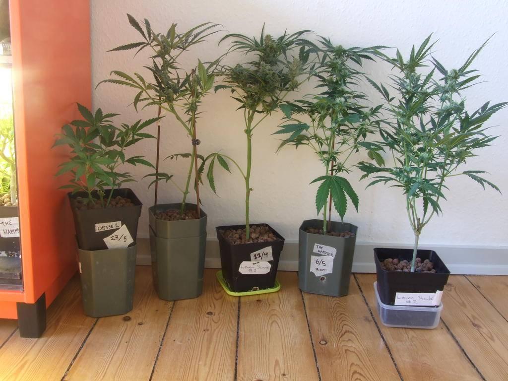Glaus goes orange 110w pl-l - Micro Grows - International