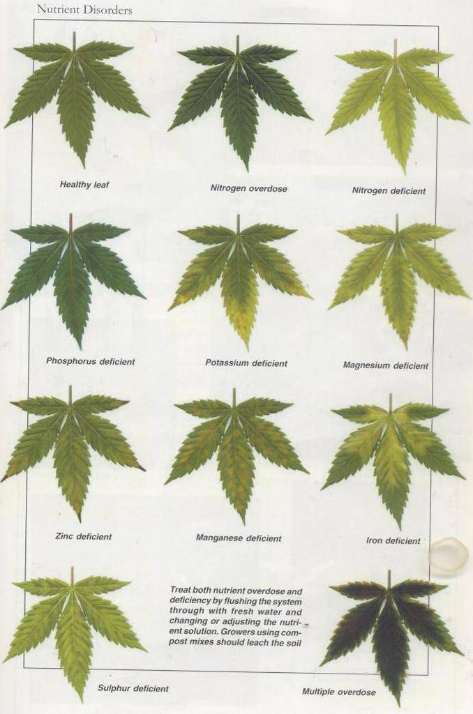 cannibus plant deficiency chart: Joe s fresh guide to sick plant diagnosis cannabis infirmary