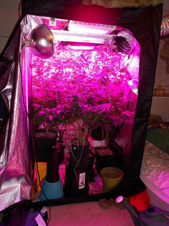 Best Led For Replacing 1000w Page 2 Led Grow Lights