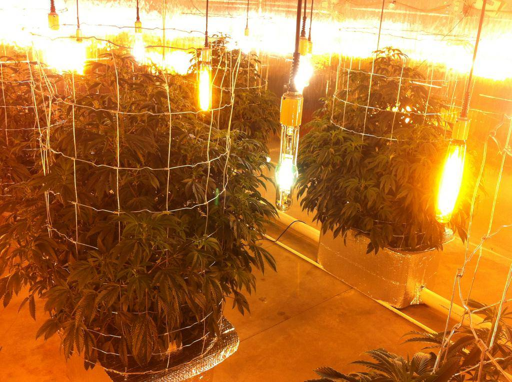 new 6 plant gettotree setup page 5 indoor grows hydro international cannagraphic. Black Bedroom Furniture Sets. Home Design Ideas