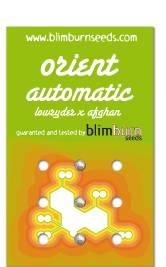 BLM Orient (automatic)