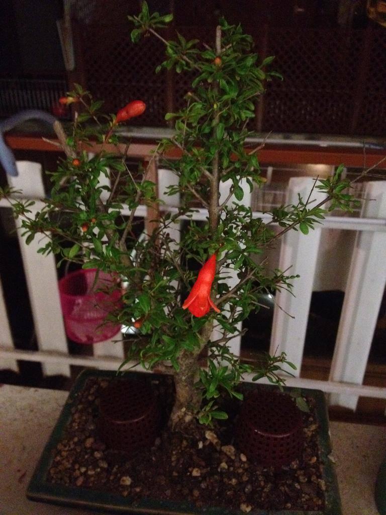 Parliamo di piante no cannabis page 18 area for Acquisto piante ulivo