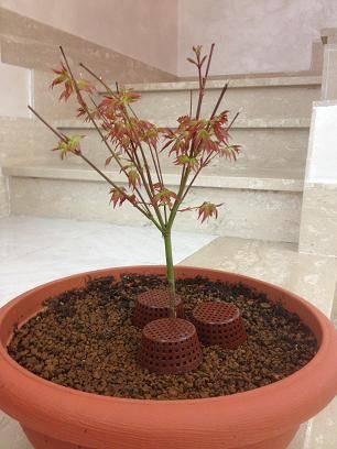 Parliamo di piante no cannabis page 12 area for Acquisto piante ulivo