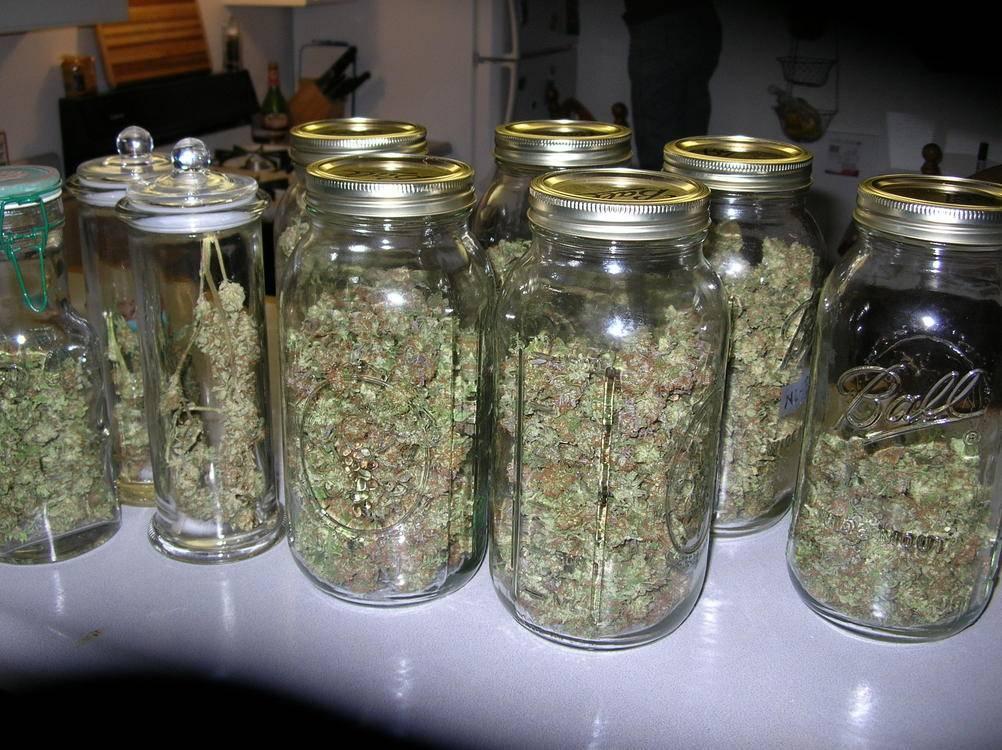 Mason Jars Cannabis Harvesting Amp Processing