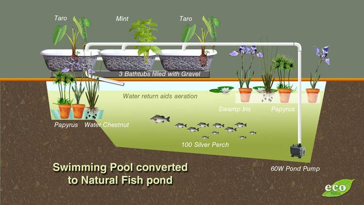 Kiddie pool grow contest season 2013 14 contests for Swimming pool koi pond conversion