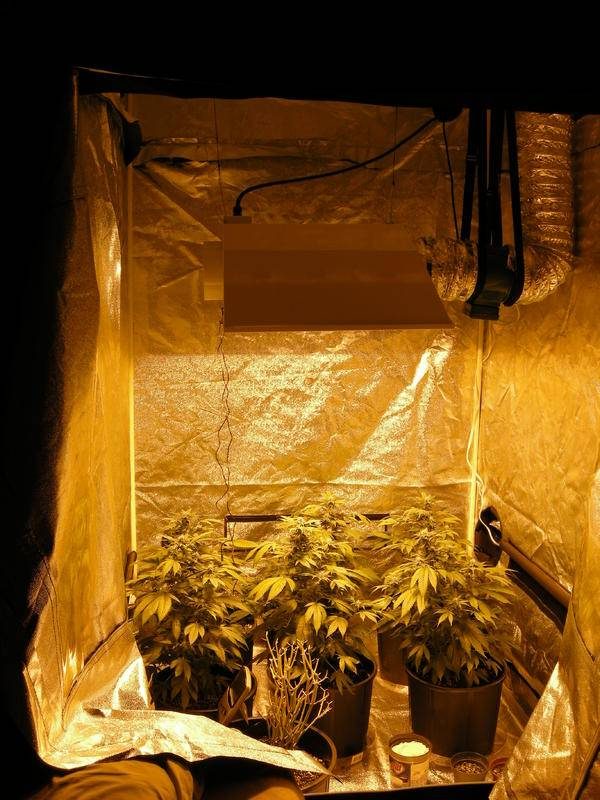 Grow Room Setup: Tents: Homebox, Hydrohut, Secret Jardin, Growlab Ect