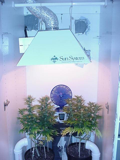 Couple Ideas For A 2x2 Sog Tent Growroom Designs